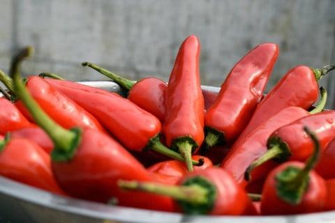 Scharfes Essen mit roten und grünen Jalapenos.
