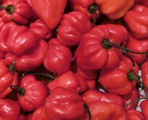 Rote scharfe Habanero