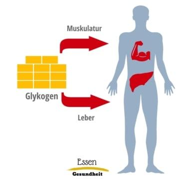 Glykogenspeicher